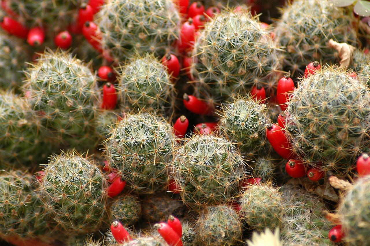 kaktusy | szklarnie przydomowe